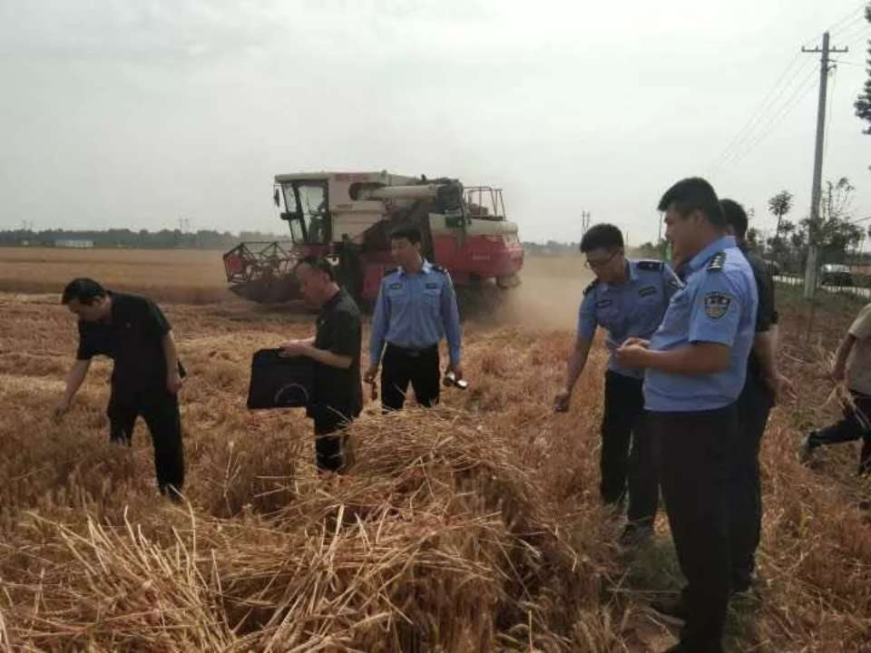 """平阴一""""老赖""""玩失踪下落不明 名下百亩小麦被法院收割变卖"""