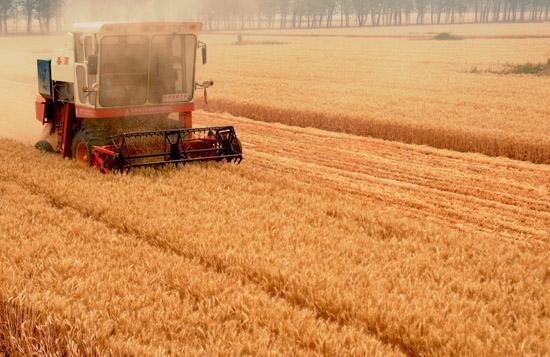 山东已收获5793.1万亩小麦,11市已完成收获