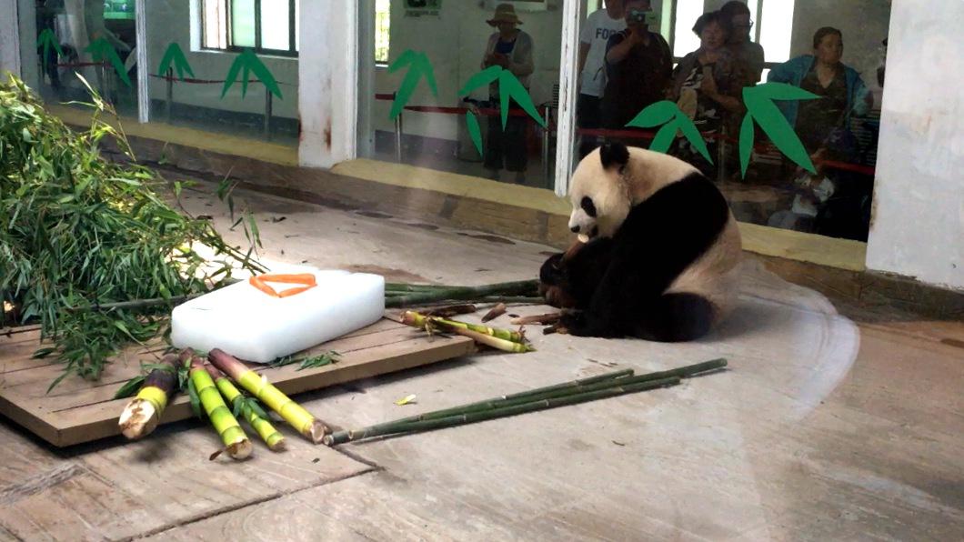 视频丨花式降温!快来看看济南动物园里的萌物如何过盛夏