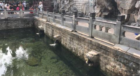 44秒丨记者探访济南黑虎泉:西侧一兽头暂停喷 水位比年初下降74厘米