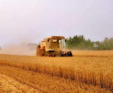 山东:收获小麦5925.5万亩 占应收面积97.4%