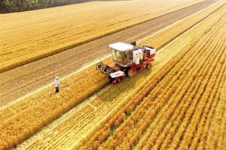 山东:累计收获小麦6005.2万亩 占应收面积的98.8%