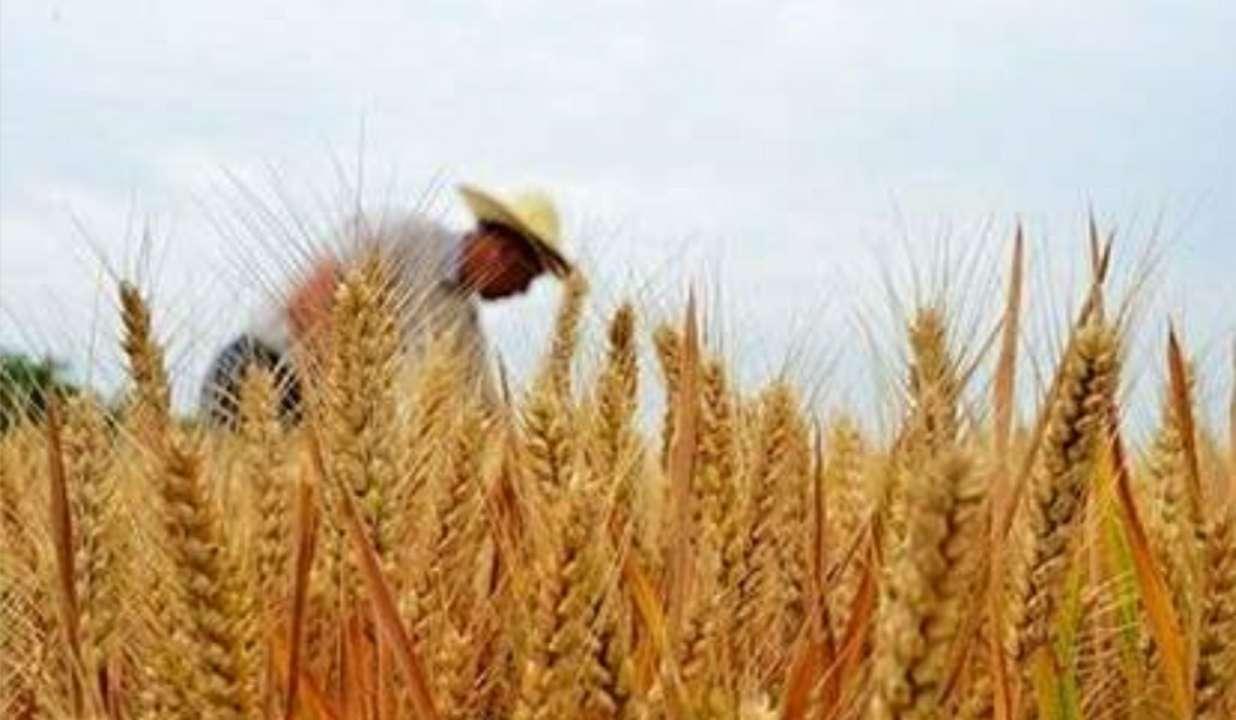 """山东大力提高农业保险风险保障水平 形成""""四位一体""""新格局"""