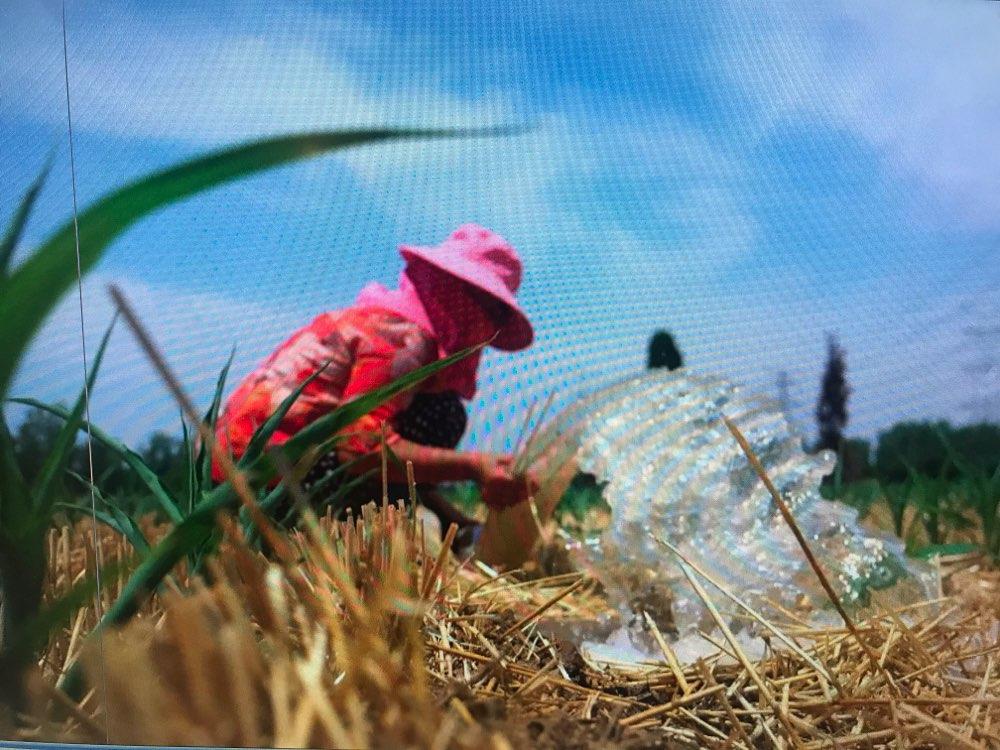 旱情得到一定控制 山东在田作物受旱面积降至1305万亩
