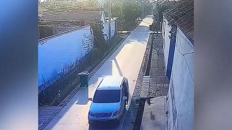 32秒丨滨州农村街头偷狗一幕曝光!仅用2秒,技术娴熟