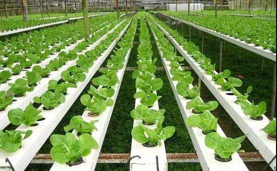 济南出台农业产业化重点龙头企业认定办法 参与脱贫攻坚可优先考虑