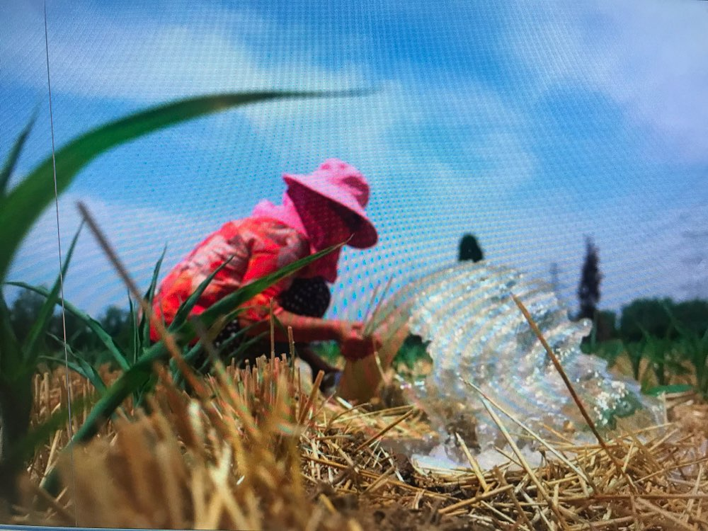 山东1533万亩农作物受旱 各地加强预警应对旱涝交替