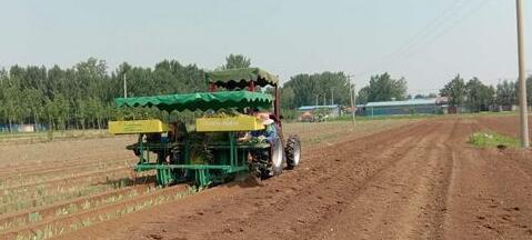 山东开展大葱机械化移栽试验测试 加快新技术推广应用