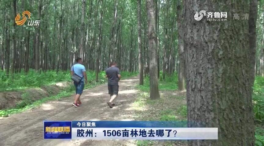 今日聚焦丨 通过法院拍得1506亩林地有证无地 胶州市自然资源局工作人员:管不了