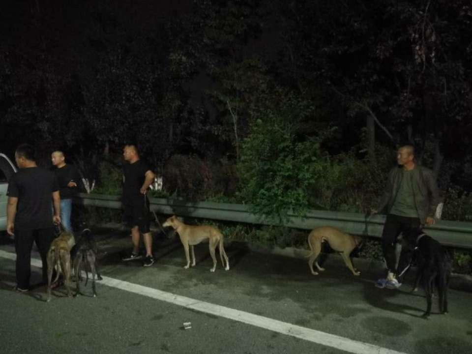 七人欲抓野兔拉五条猎犬上高速 下高速被查处一人酒后一人无证