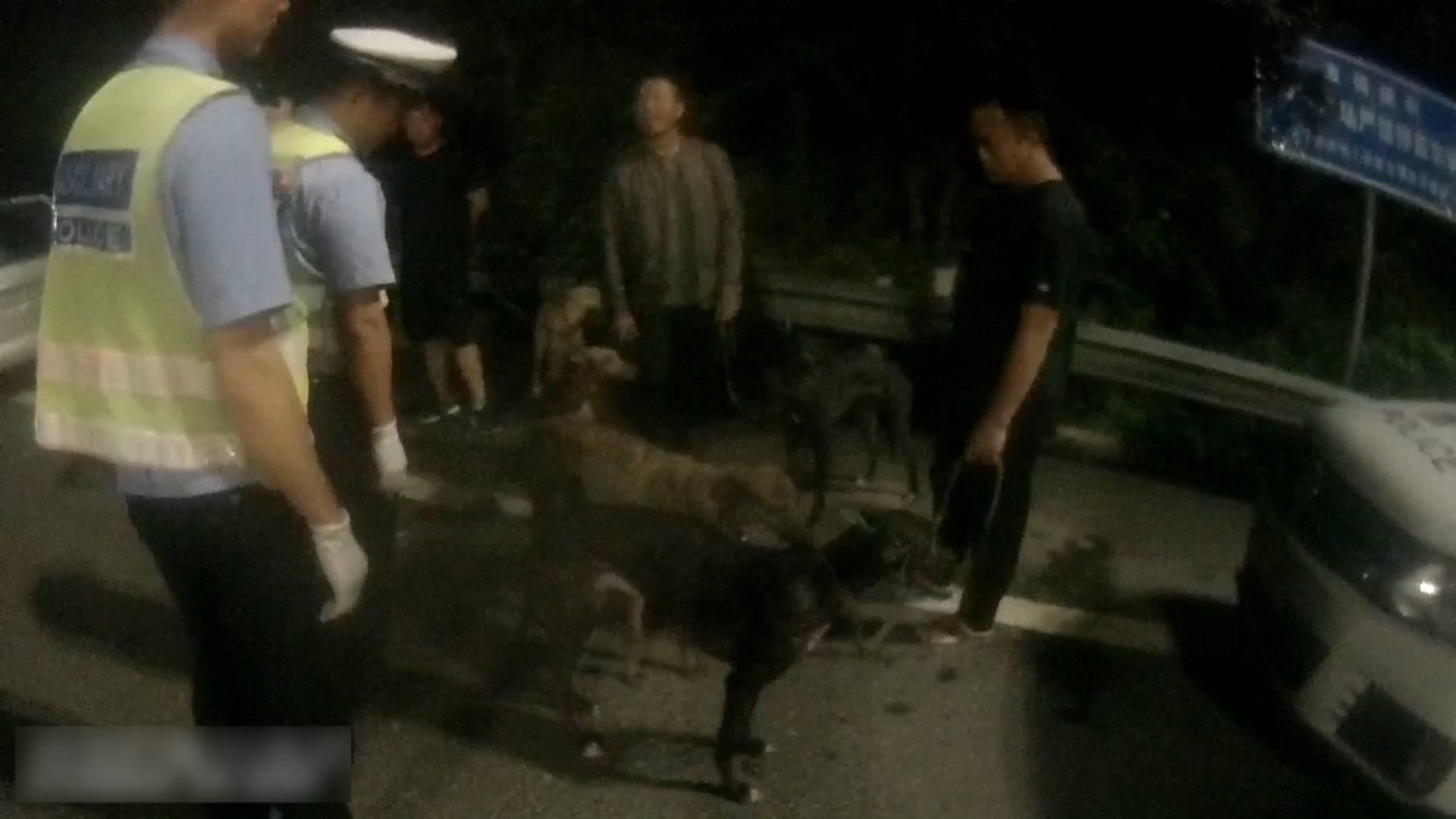 40秒丨被抓现形!7人欲抓野兔 拉5条猎犬上高速 更可气的是……