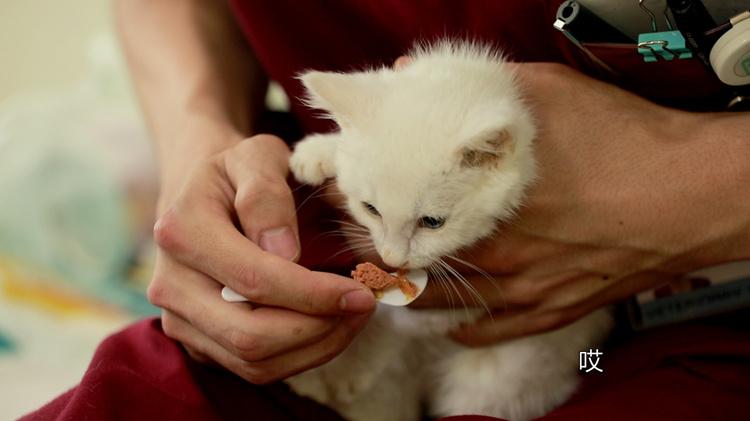 记录平凡 | 这只小猫从排水沟被她捡回来,她说动物给人的回报最大