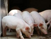 第十六批17家省外企业可向山东提供生猪及生猪产品