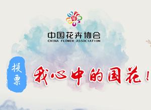 中国花协推荐牡丹为国花 网友:我一直以为牡丹本来就是