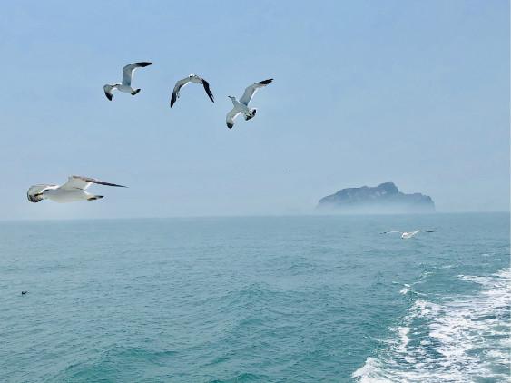"""我爱这片蓝色的国土丨仙境海岸、网红沙滩 一起打卡这座被海带""""霸占""""的小岛"""