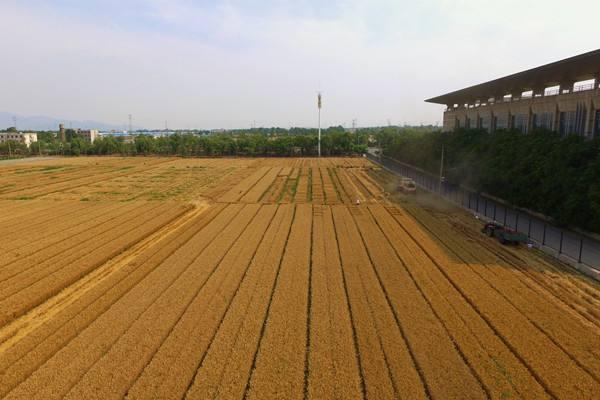 山东首批6县试点农业生产社会化服务规范化建设 明年计划增加10个左右