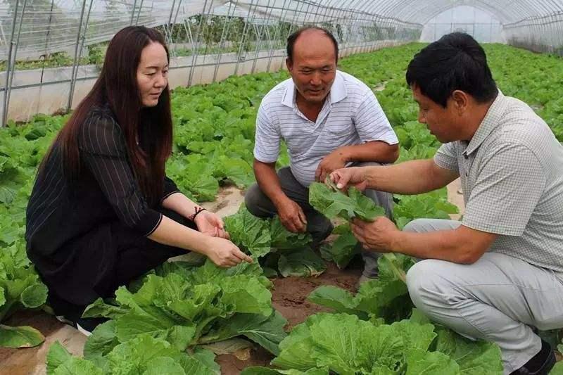 山东:到2022年培育4000家省级农民合作社示范社 助力小农户发展