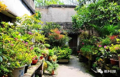2019年底山东农村5%庭院将建成美丽庭院示范户
