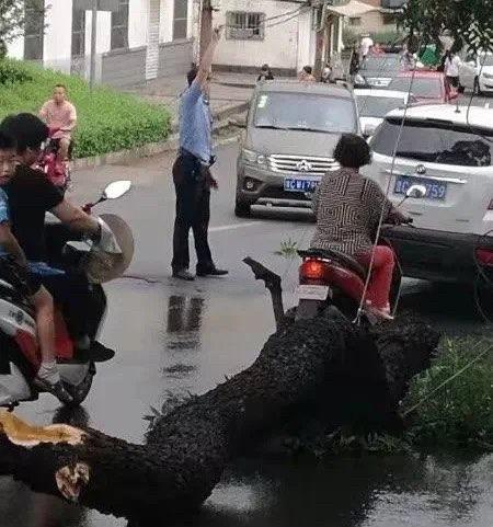 暴雨突发险情 博山民警这样做温暖了许多人…