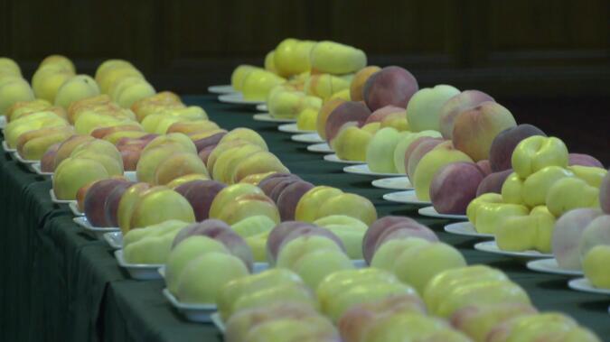83秒   电商助力桃农增收 蒙阴蜜桃一年卖掉1亿斤