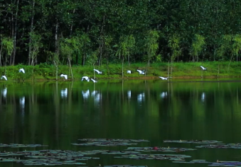 85秒|水天一色,白鹭翩飞!台儿庄涛沟河湿地美爆了