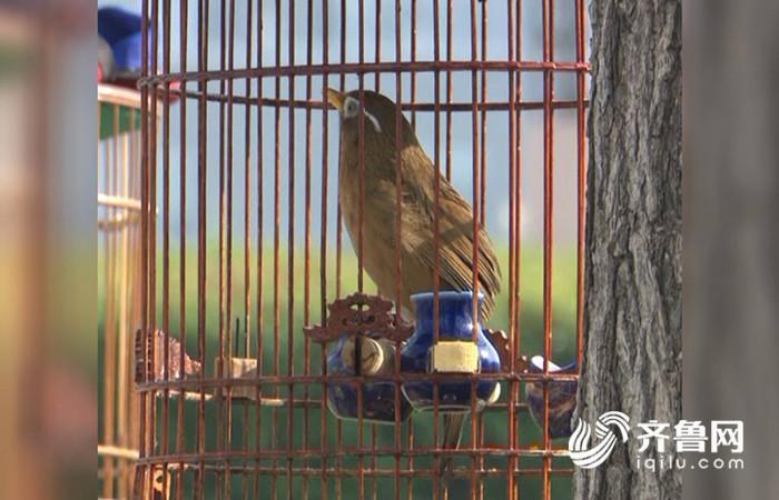 鸟1_副本.jpg