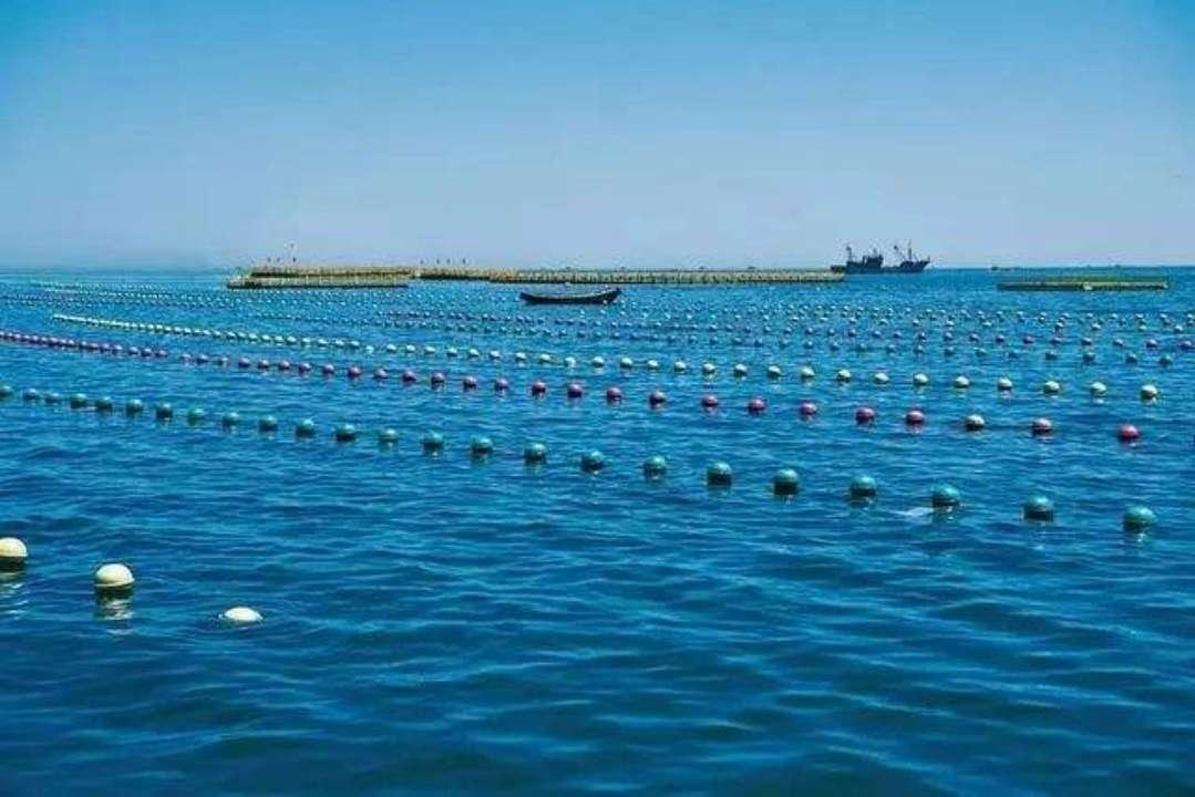 山东省现代化海洋牧场建设综合试点工作全面启动 成效显著
