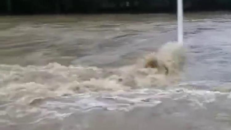 现场实拍!淄博沂源降水超100mm 张家石沟村村口大路变大河