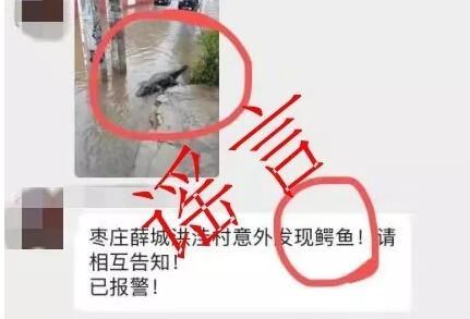 暴雨后出现鳄鱼?枣庄高新公安:这是个彻彻底底的谣言!