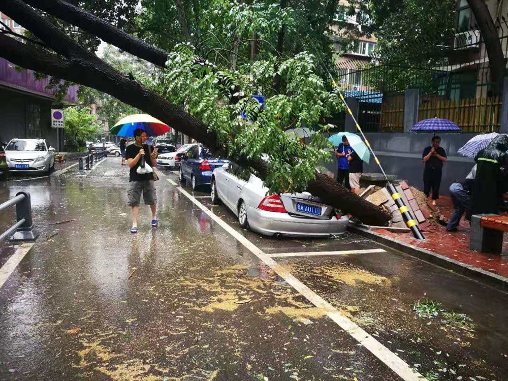 暴雨+大风,济南一棵国槐倒塌砸车挡路