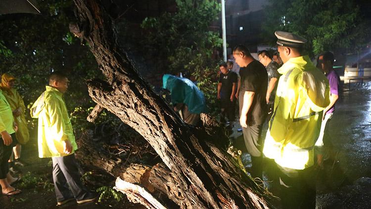 42秒丨8级大风将大树刮倒,德州交警、城管、社区人员连夜冒雨清障