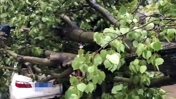 34秒|狂风暴雨折倒树木 聊城园林工人连夜速清理