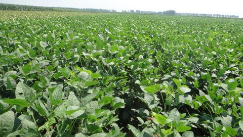山东发布大豆灾后生产管理技术指导意见 着力及时排除田间积水