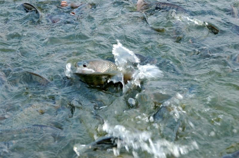 灾后水产养殖如何减损?山东发布灾后技术指导意见