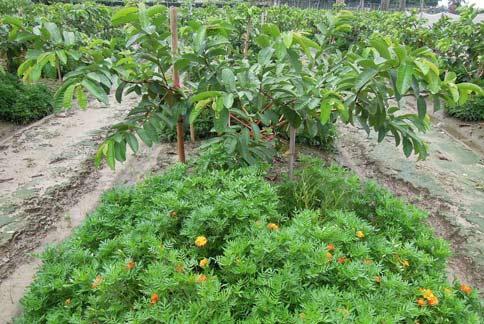 山东发布果园茶园灾后生产管理技术指导意见 加固树体加快排水