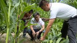 43秒|聊城临清:农业抗灾救灾在行动 专家现场为农民支招