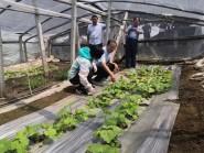 种下新苗,期盼收获!台风过后潍坊昌乐菜农积极恢复生产