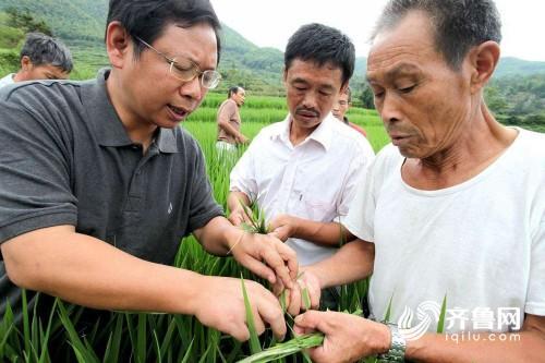 玉米、花生、大豆……潍坊市发布灾后生产管理技术指导意见