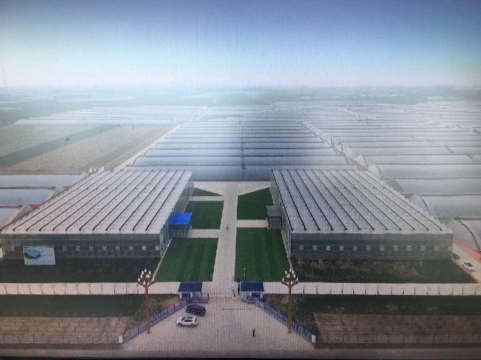 台风暴雨中寿光这个产业园里160座蔬菜大棚完好无损