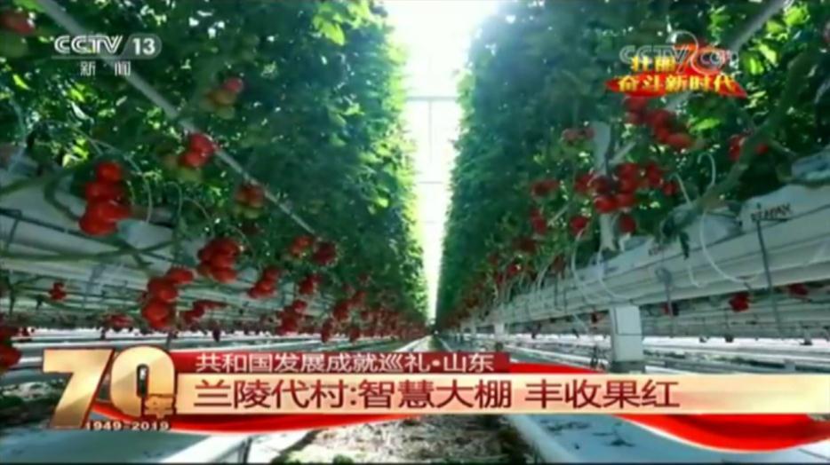 共和国发展成就巡礼•山东篇丨兰陵代村:智慧大棚 丰收果红