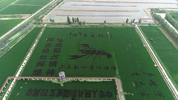 俯视120亩稻田画!惊叹、壮观