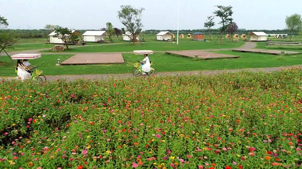 百日菊、月季花进入盛花期,台儿庄祥和庄园千亩花海迎客来