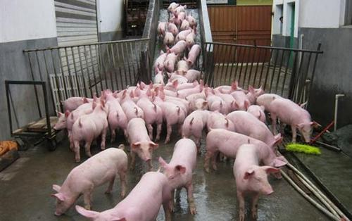 山东取消生猪生产附属设施用地15亩上限