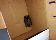 潍坊海关截获1只活体东方蝙蝠 检出乙脑病毒阳性