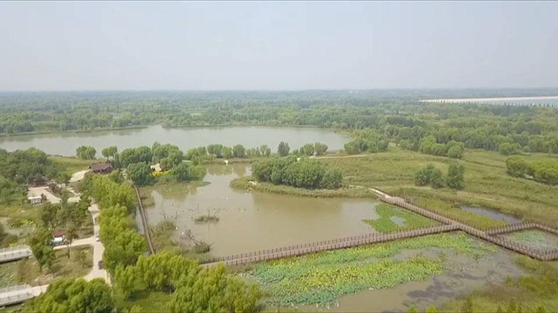 40秒航拍山东最大城市湿地 济西湿地开放倒计时