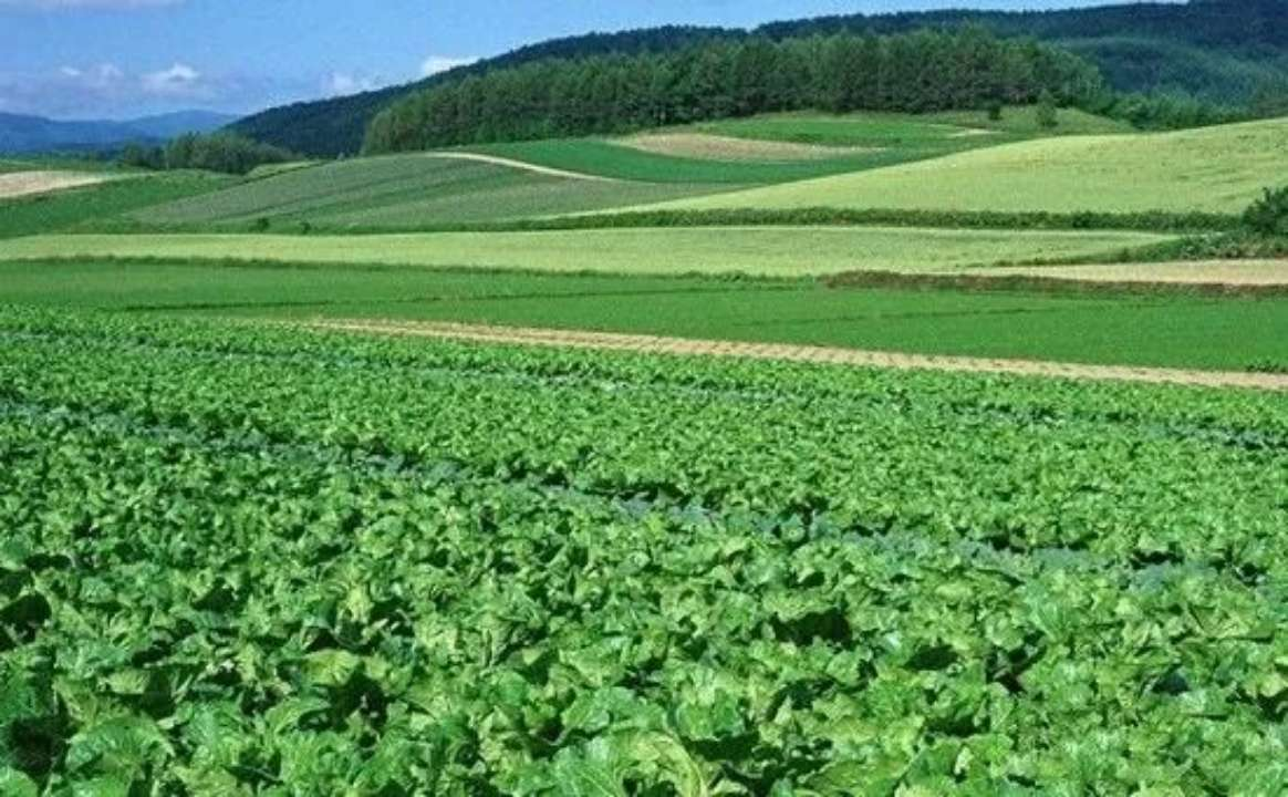 居全国首位!山东蔬菜参保面积累计达1000万亩保障金额近300亿元