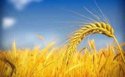 """4个受""""利奇马""""影响严重地市的10家金融机构获得支农再贷款23.7亿"""