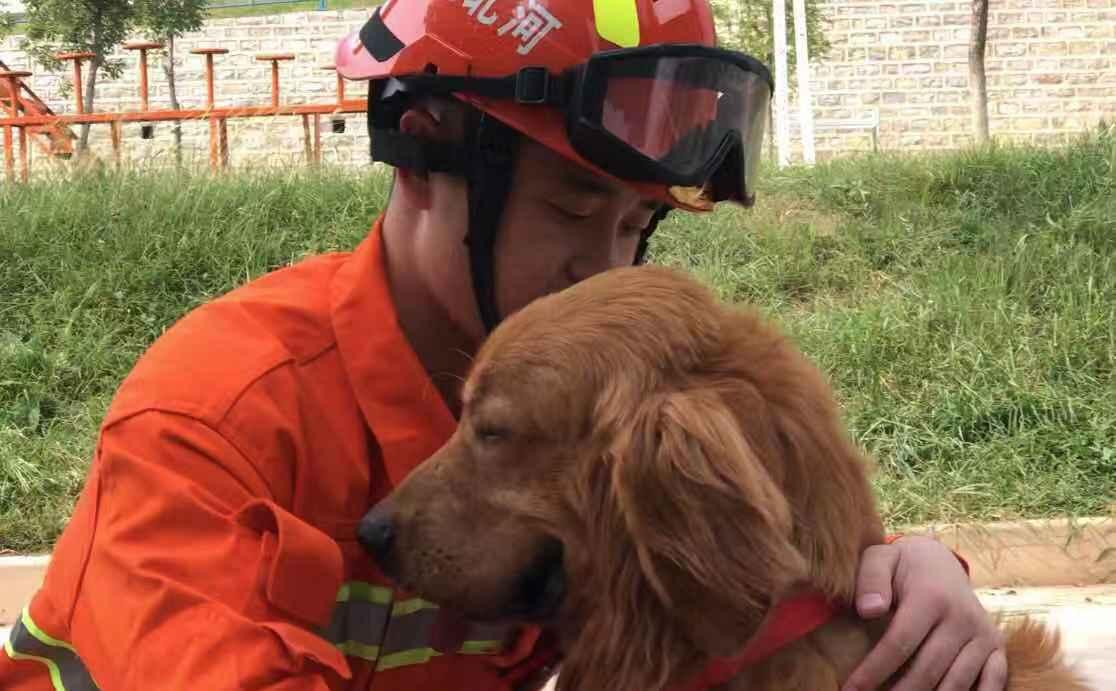 """它是一只""""神犬""""!九岁金毛一分半钟地下两米废墟搜救四人"""