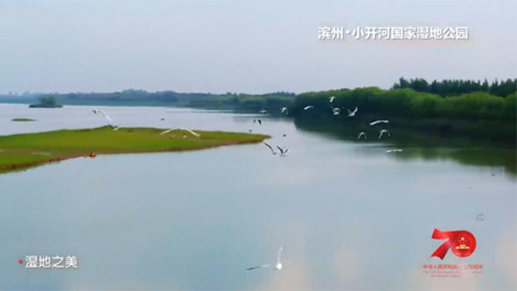 """美!滨州小开河国家湿地公园""""上镜""""《大美新山东》"""