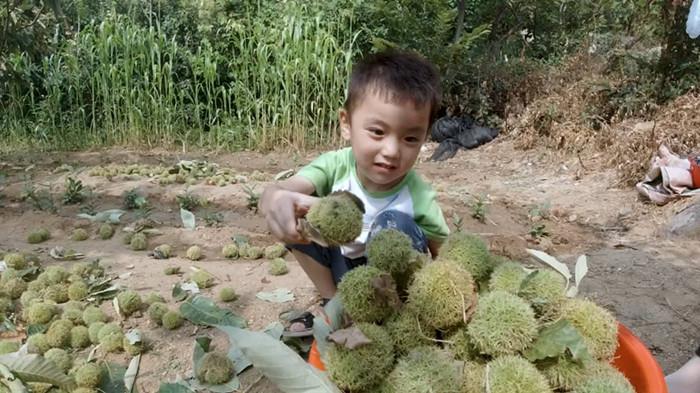 采摘游成为中秋旅游时尚 临沂天蒙山板栗节吸引众多游人